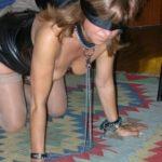 Margot une chienne lyonnaise soumise sans maître depuis un mois